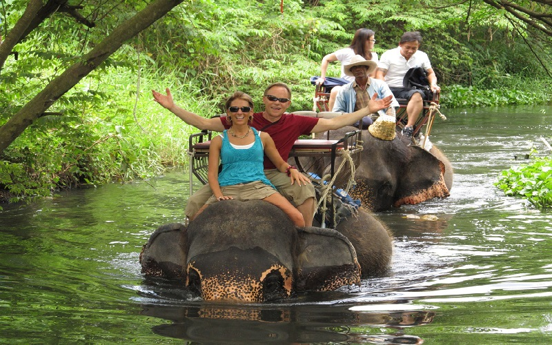 Elephant Trekking & Show + Ox-Cart Riding + Buffalo Half Day Tour