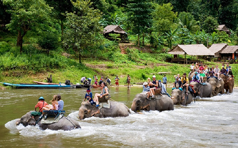 Elephant Trekking & Show + Kayaking + Fish Spa Show Half Day Tour