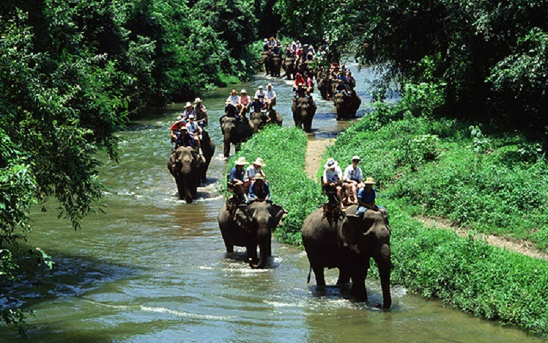 Elephant Trekking + Rafting + Flying Fox